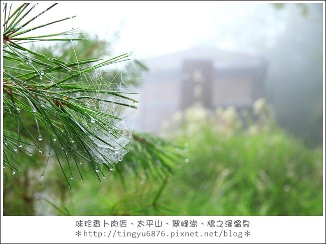 太平山46.JPG