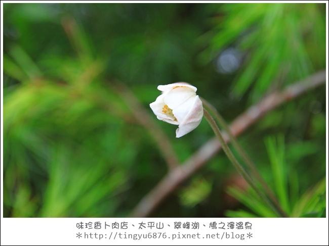 太平山47.JPG