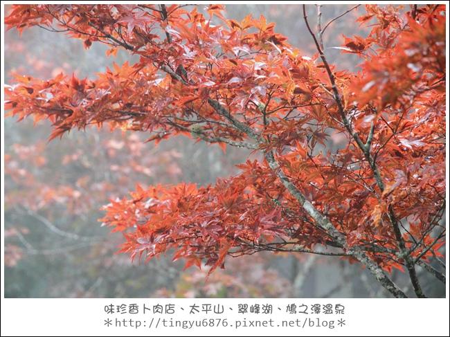 太平山51.JPG