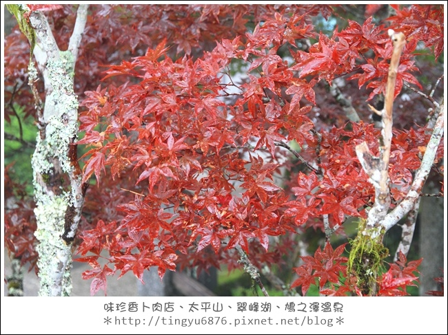 太平山52.JPG