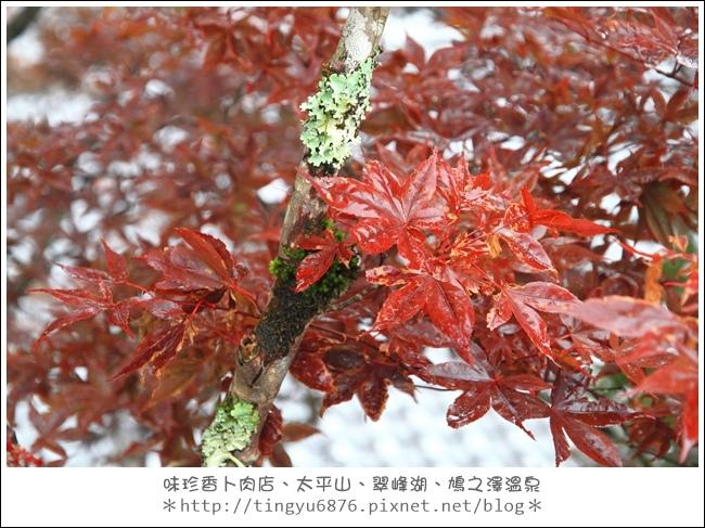 太平山55.JPG