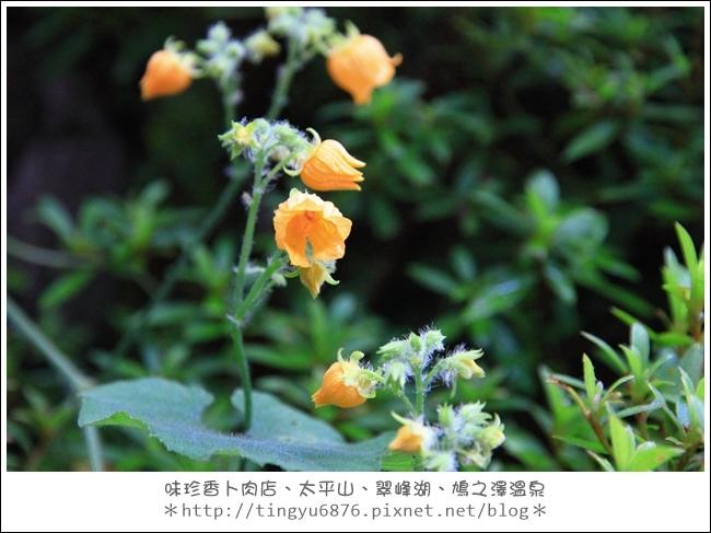 太平山60.JPG