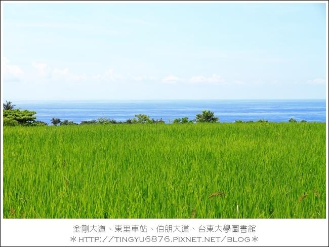 金剛大道15.JPG