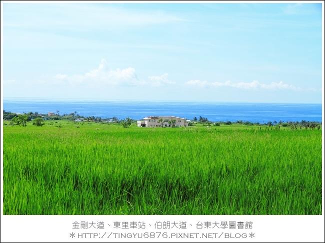 金剛大道19.JPG