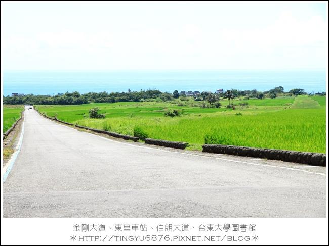 金剛大道41.JPG