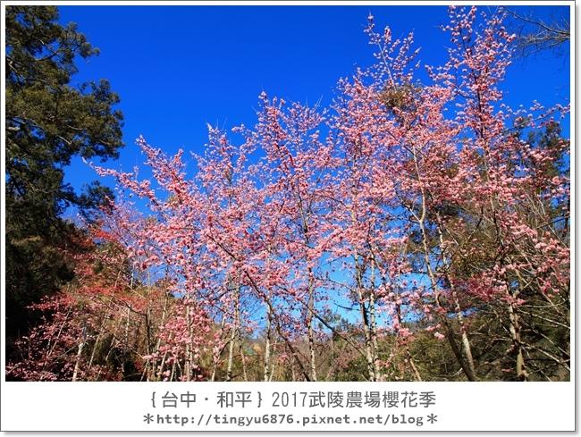 武陵農場19.JPG