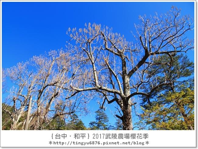 武陵農場20.JPG