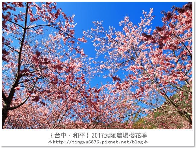 武陵農場37.JPG