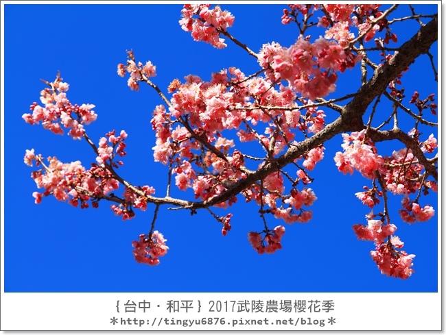 武陵農場42.JPG
