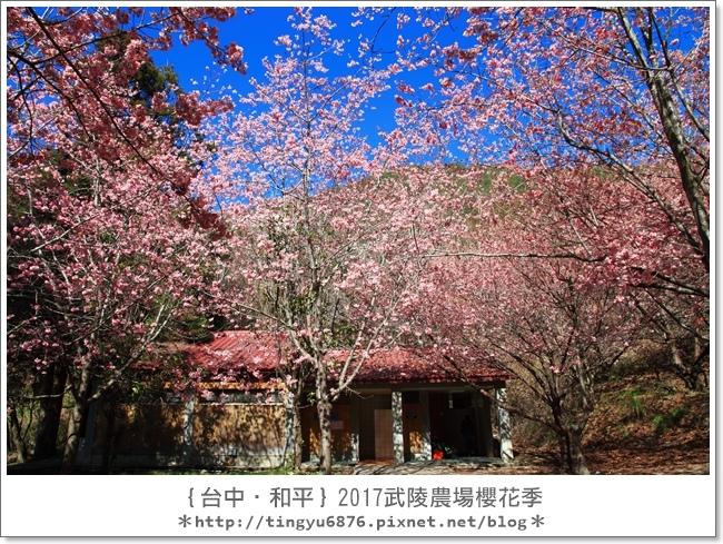 武陵農場49.JPG