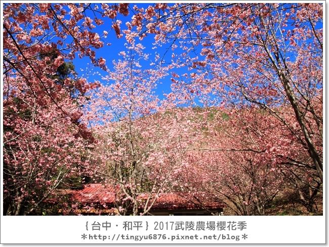 武陵農場50.JPG