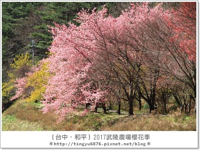 武陵農場75.JPG
