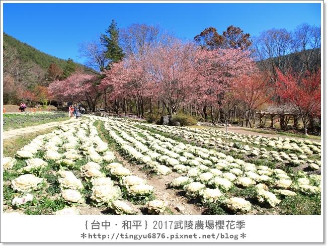 武陵農場82.JPG