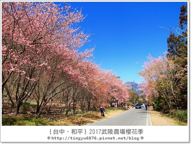 武陵農場177.JPG