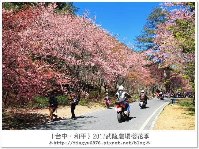 武陵農場190.JPG