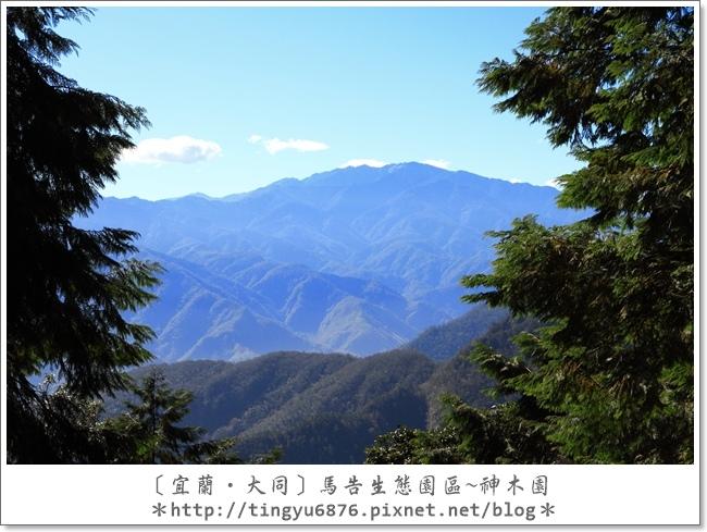 神木園37.JPG
