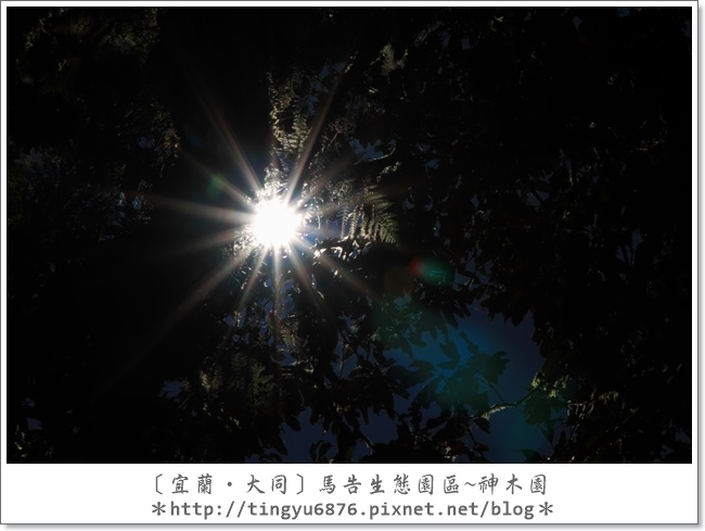 神木園48.JPG