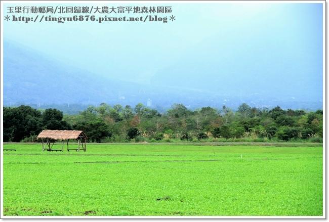 大農大富平地森林園區82.JPG