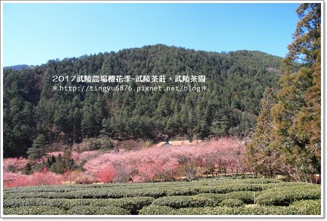 武陵農場256.JPG