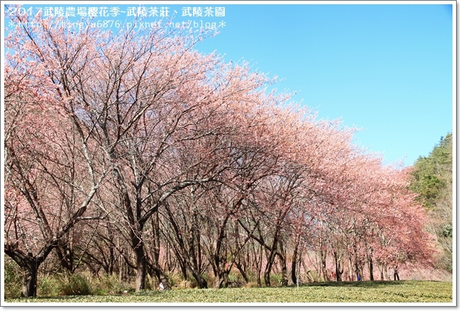 武陵農場267.JPG