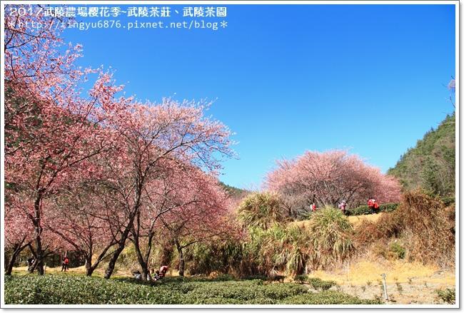 武陵農場268.JPG