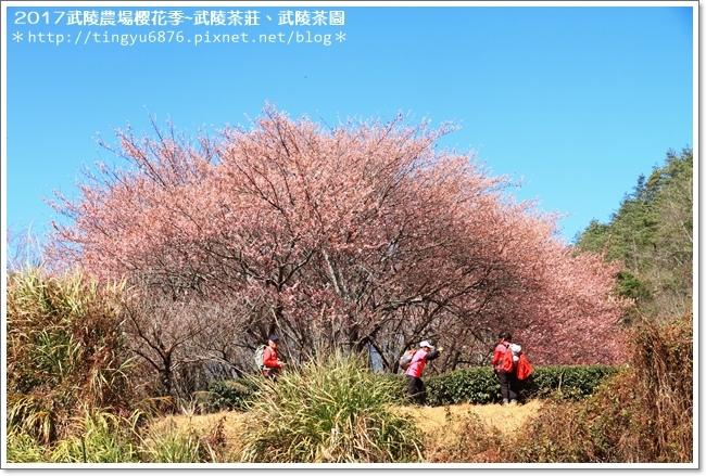 武陵農場269.JPG