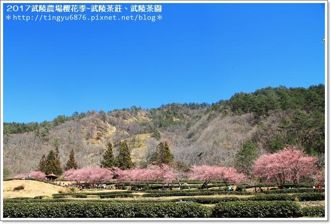 武陵農場270.JPG