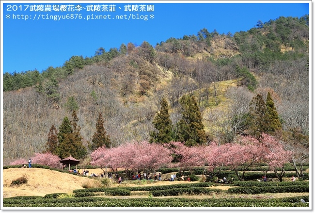 武陵農場271.JPG