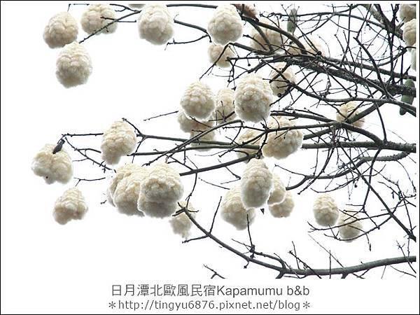 Kapamumu b&b132.JPG