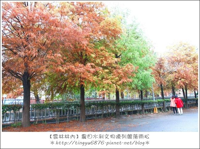 雲林林內落雨松11.JPG