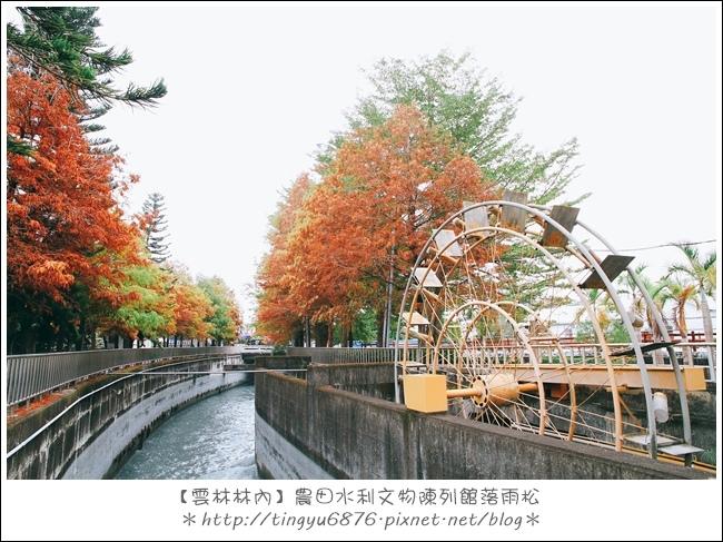 雲林林內落雨松13.JPG