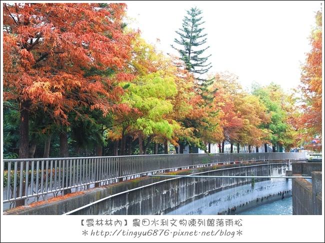 雲林林內落雨松14.JPG
