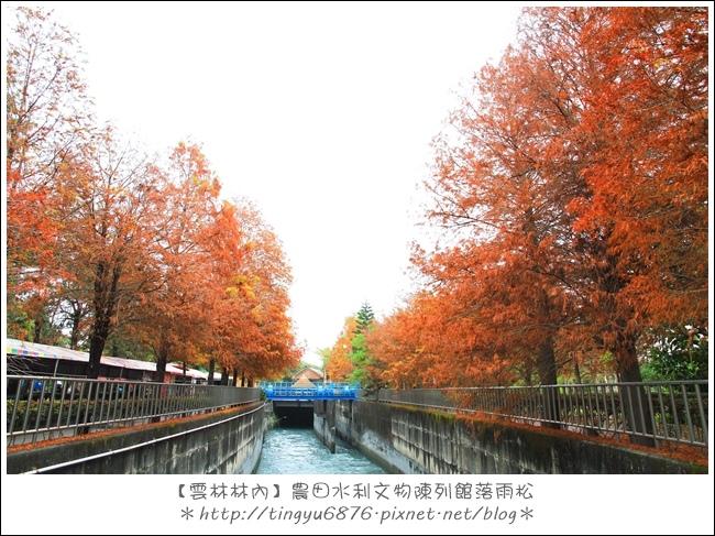 雲林林內落雨松17.JPG