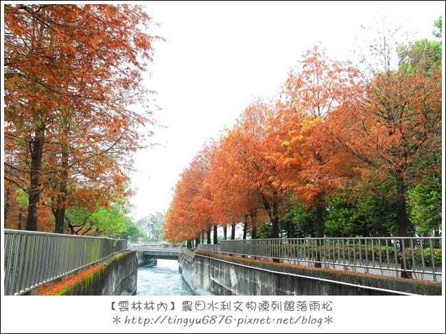 雲林林內落雨松19.JPG