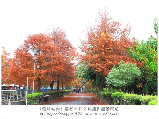 雲林林內落雨松22.JPG