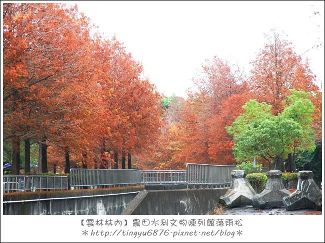 雲林林內落雨松27.JPG