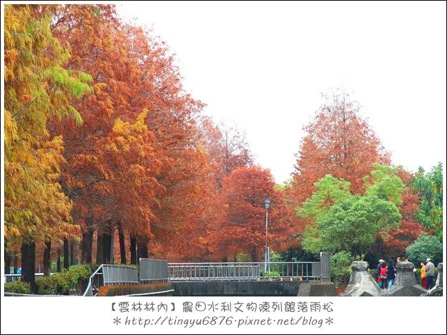 雲林林內落雨松29.JPG