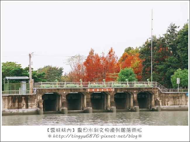 雲林林內落雨松30.JPG