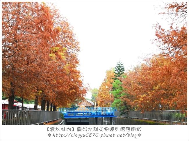 雲林林內落雨松34.JPG