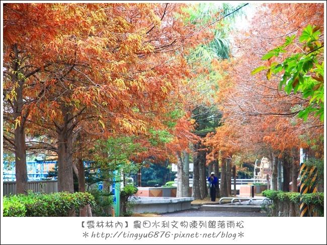 雲林林內落雨松35.JPG