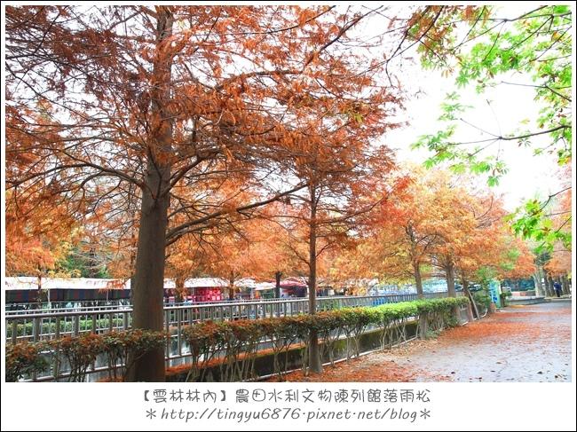 雲林林內落雨松37.JPG