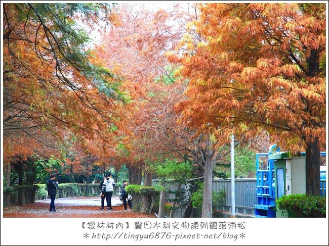 雲林林內落雨松54.JPG