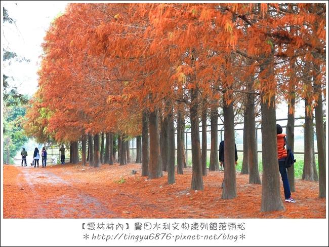 雲林林內落雨松68.JPG