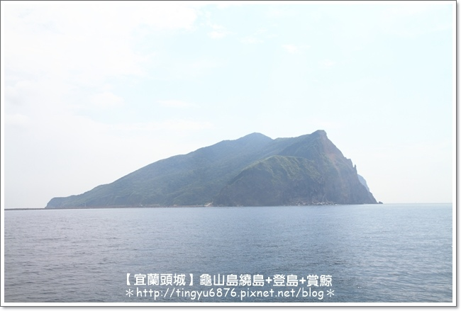龜山島賞鯨21.JPG
