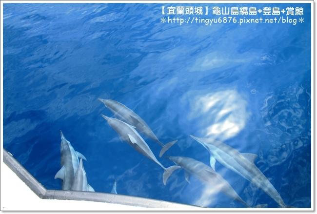 龜山島賞鯨30.JPG