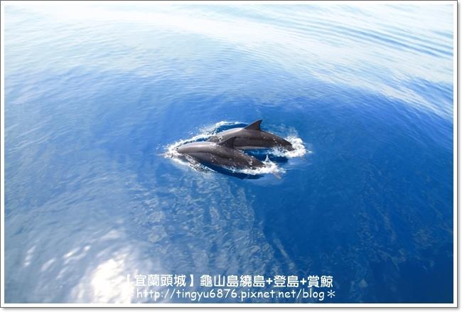 龜山島賞鯨31.JPG