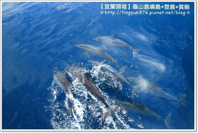 龜山島賞鯨34.JPG