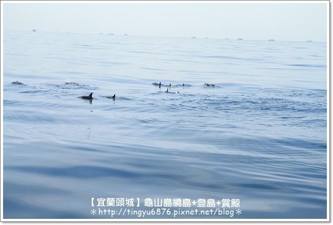 龜山島賞鯨38.JPG
