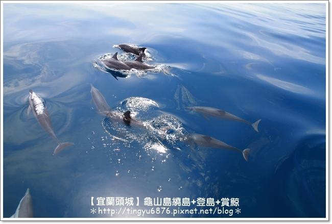 龜山島賞鯨39.JPG