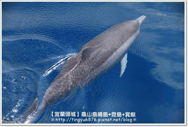 龜山島賞鯨40.JPG